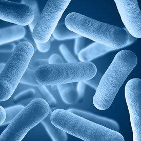 bacillus coagulans restore 3