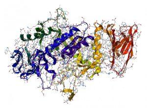 digestive enzymes restore 3
