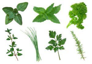 healing plants restore 3