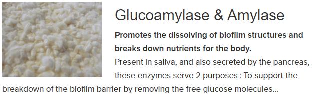 Glucoamylase Amylase